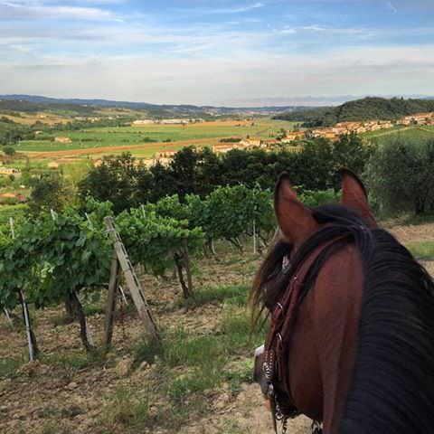 horse vineyard tuscany