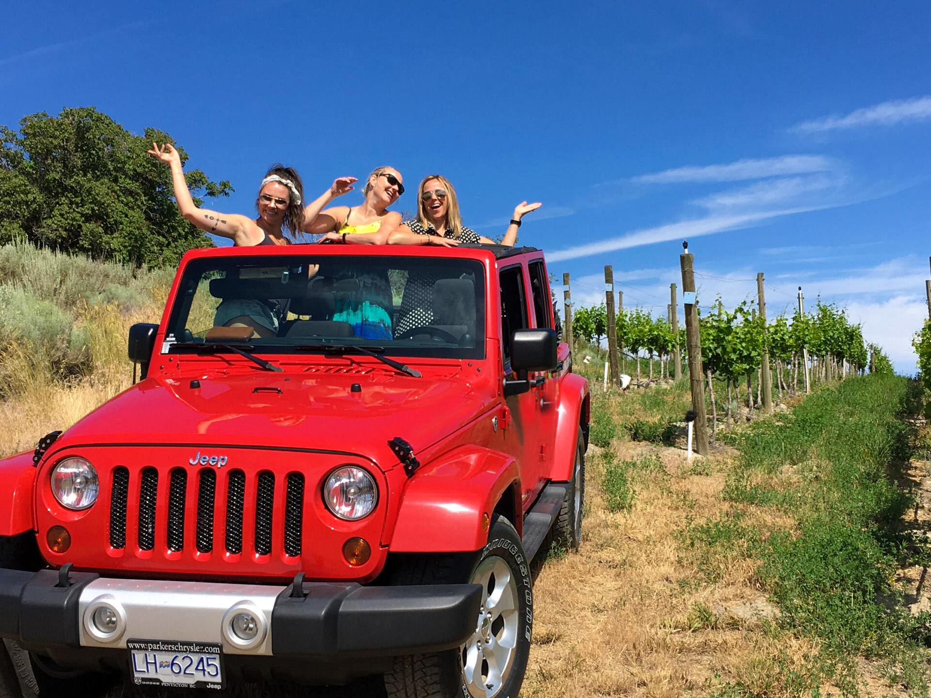 Visit of the Vineyards