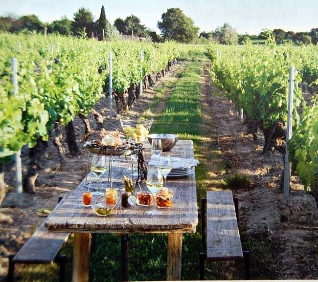 lunch vineyard
