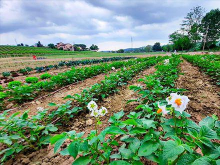 Virtual Organic Garden