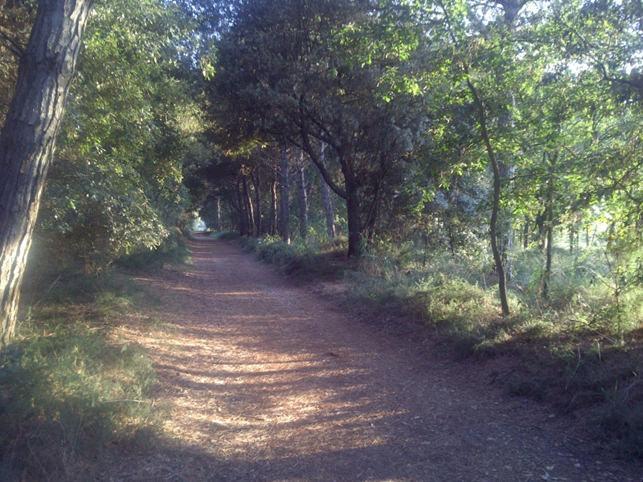 Tuscany truffle hunting