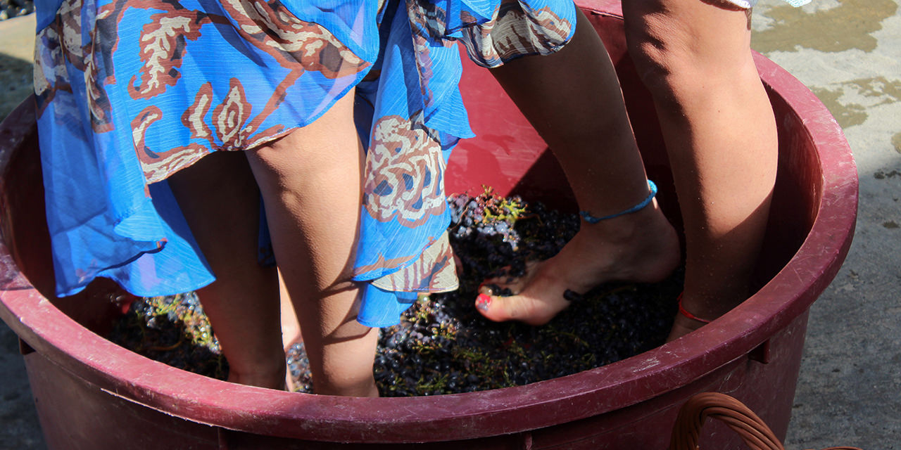 grapes-collecting