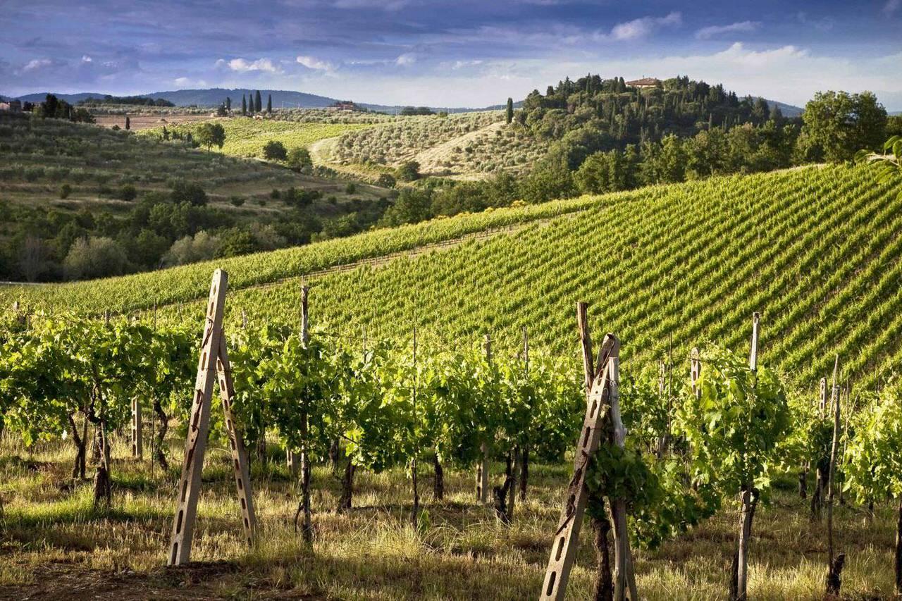 vineyard spring