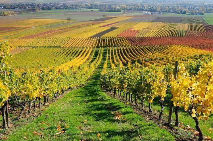 visit vineyard