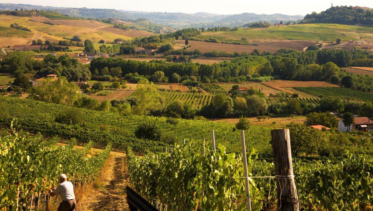 Harvesting a Vineyard