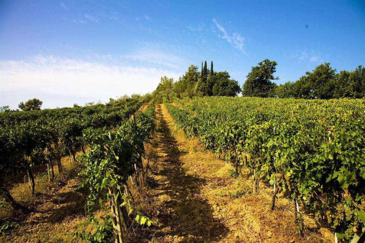 Montepescini Vineyard