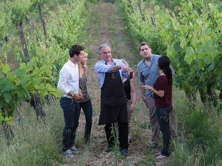 Visit the Vineyard