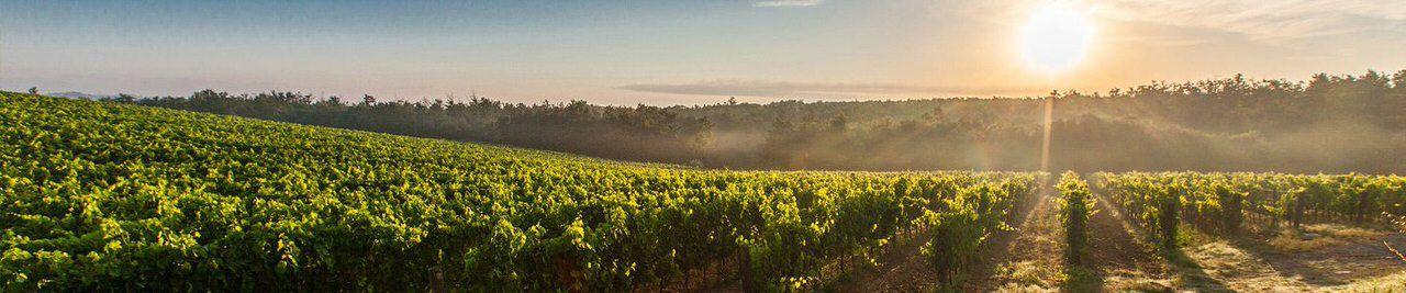 Tenuta Torciano Winery