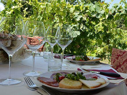 wine-tasting-vineyard-tenuta-torciano