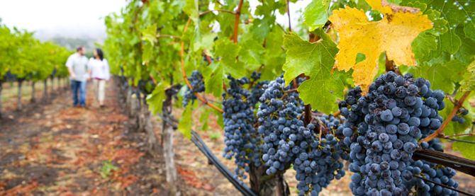 walk-vineyard-tuscany